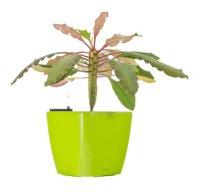 Květináč G21 CUBE 22 cm zelený samozavlažovací