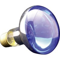 Žárovka, 6070.77, 60 W, E27, modrá