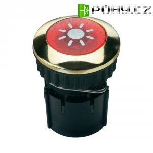 Zvonkové tlačítko podsvícené Grothe Protact 63042, max. 24V/1,5 A, zlacená mosaz